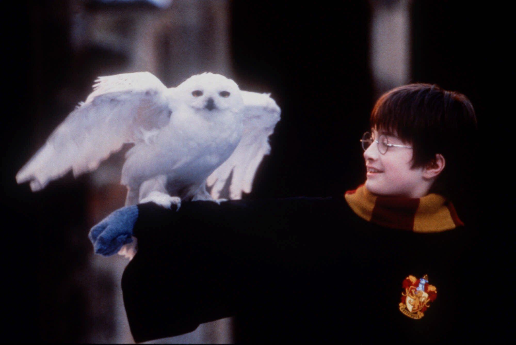 Harry Potter, metloboj i puno volje…