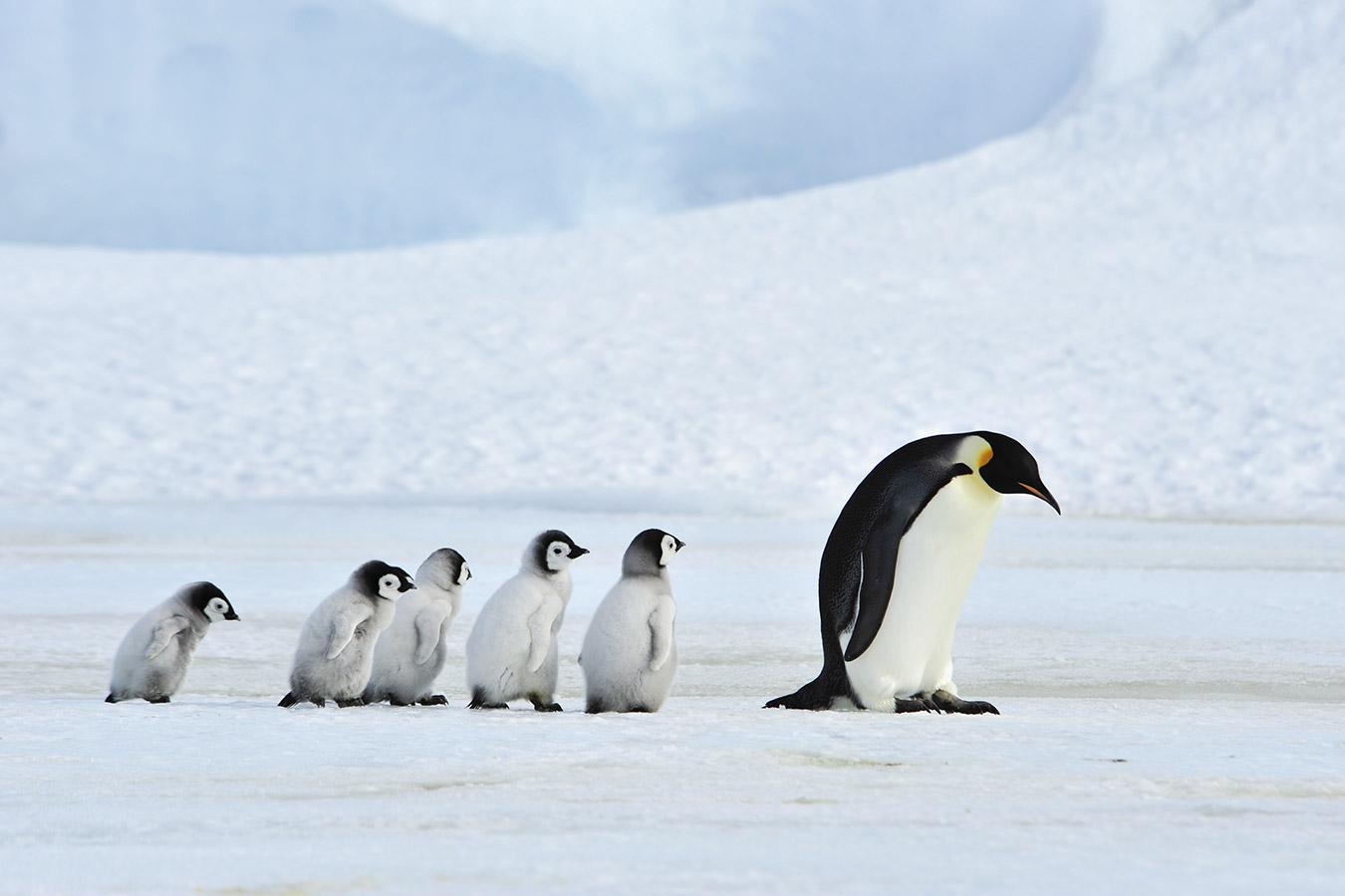 41.-43. trening: Pingvini, kriza i promjena polumaratona